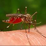 Phun thuốc muỗi