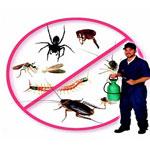 Diệt côn trùng khác